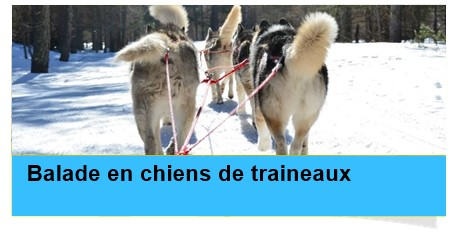 balade chiens traineaux casterino